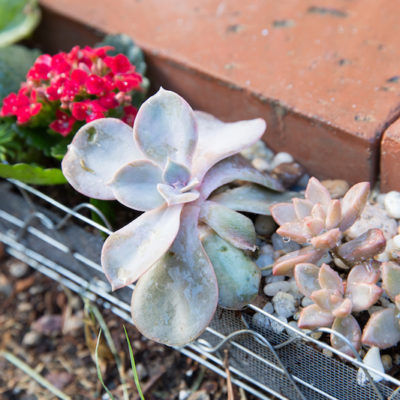 Create a Cute Succulent Border for Your Shed