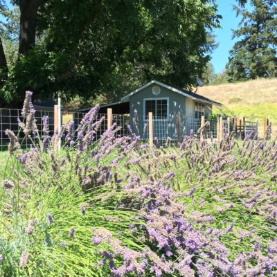 Get Out and Grow Something: Lavender, Lemons and Lettuce